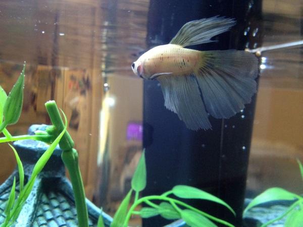 best-pet-fish-betta-stickpets2