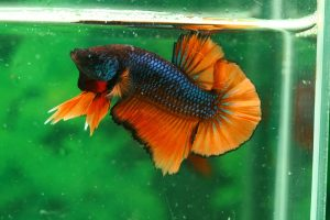 5 best pet fish for kids easy fun and low maintenance