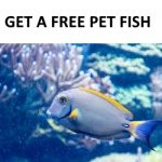 5 Ways to Get a Free Pet Fish (And Free Aquarium Supplies)