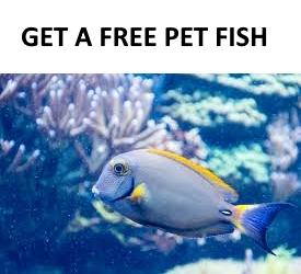 Get a free pet fish.